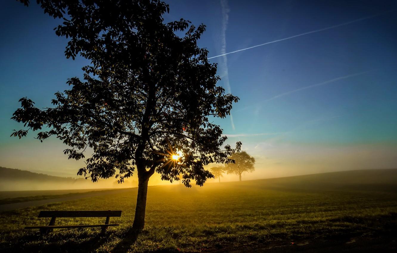Photo wallpaper light, fog, tree, morning, bench