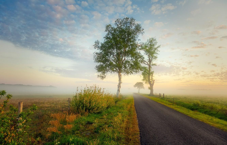 Photo wallpaper road, summer, fog
