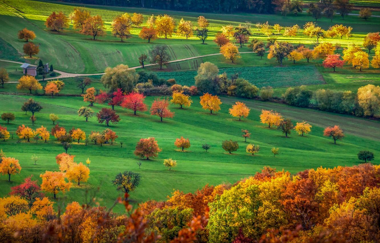 Photo wallpaper field, autumn, trees, Switzerland, valley