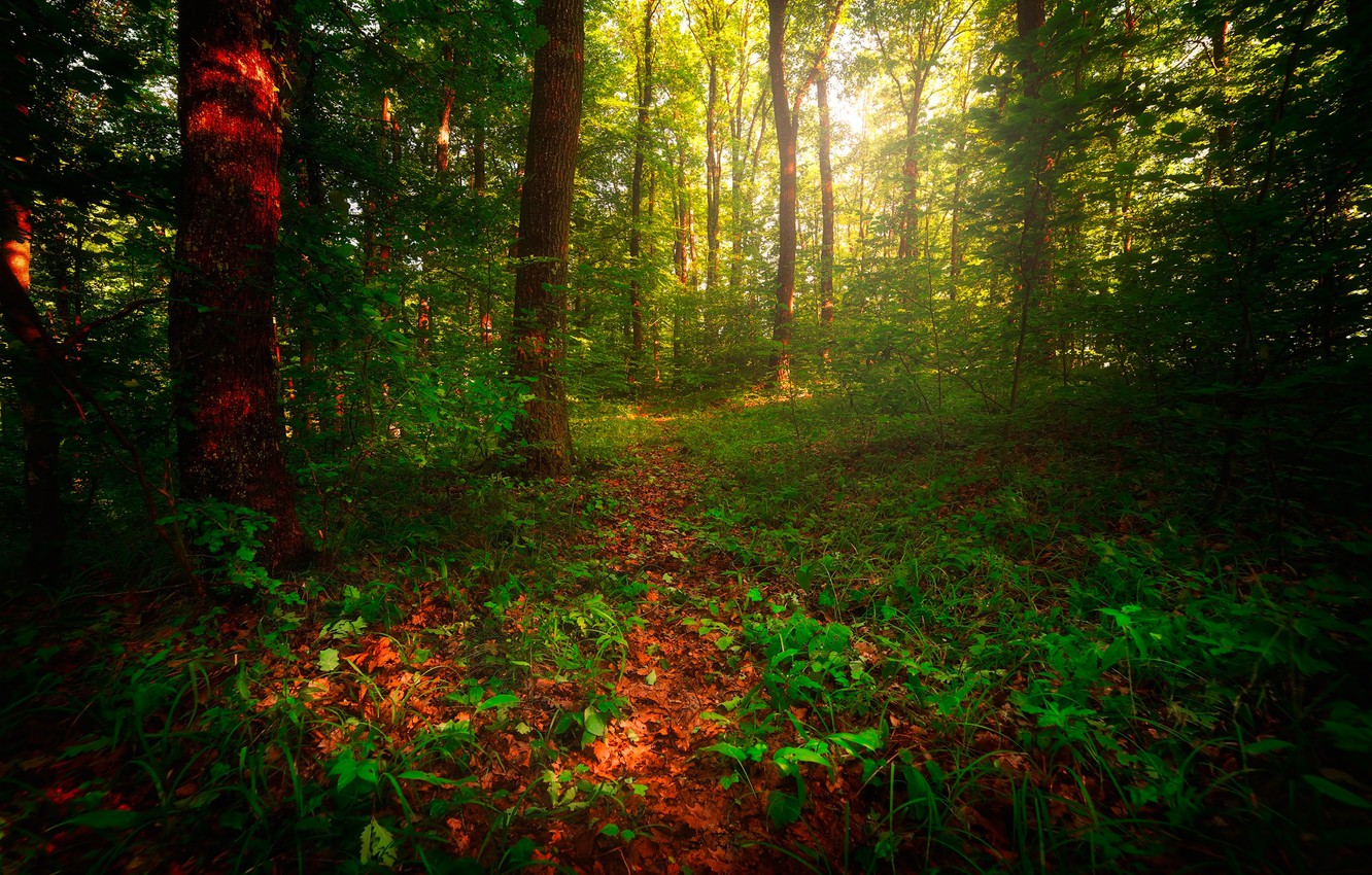 Photo wallpaper forest, grass, trees