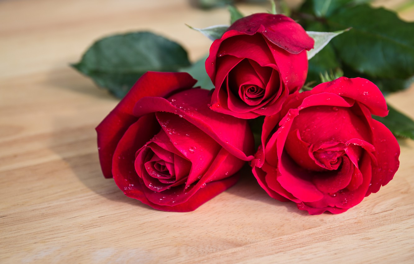 Photo wallpaper flowers, roses, bouquet, red, red, buds, flowers, romantic, roses