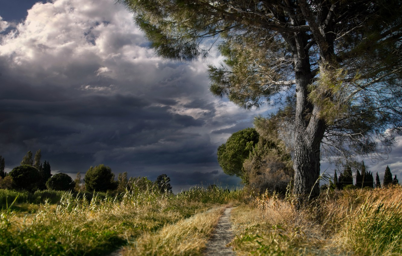 Photo wallpaper road, nature, tree