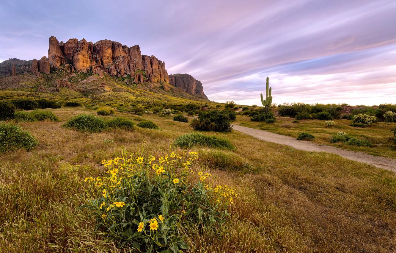 Photo wallpaper landscape, Flowers bloom, Arizona desert, Superstition Wilderness