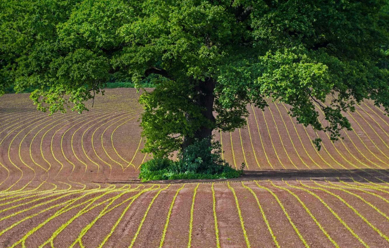 Photo wallpaper field, Wales, oak, Monmouthshire
