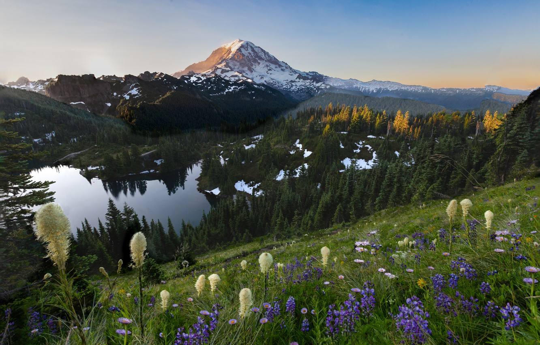 Photo wallpaper trees, landscape, mountains, nature, lake, slope, USA, grass, national Park, National Park, Mount Rainier, Mount …