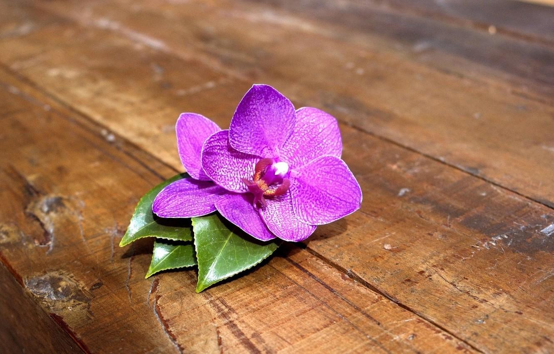 Photo wallpaper flower, macro, orchids