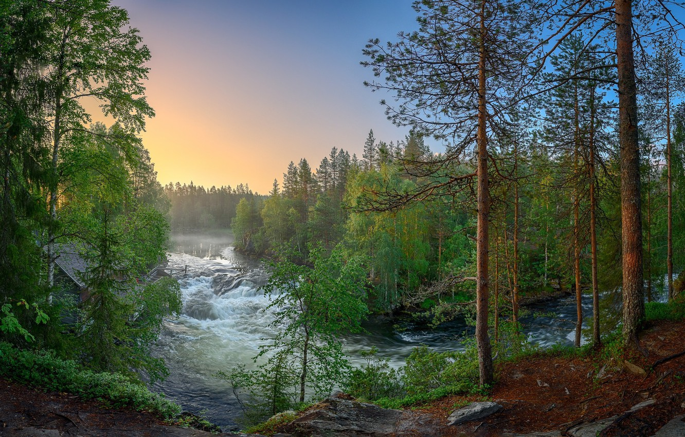 Photo wallpaper forest, river, Finland