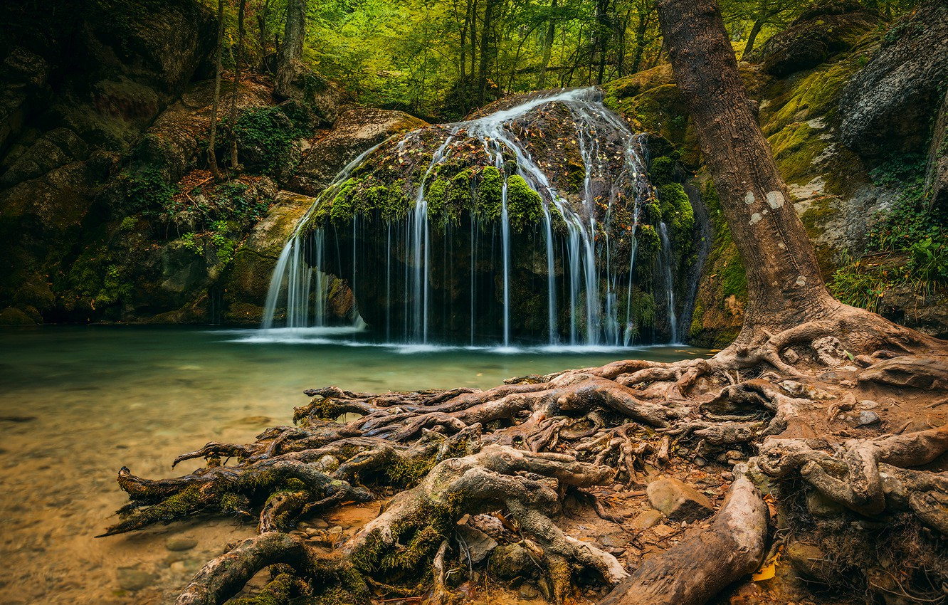 Photo wallpaper forest, trees, nature, roots, waterfall, gorge, Crimea, Haphal reserve, Haphal, Ulu-Uzen