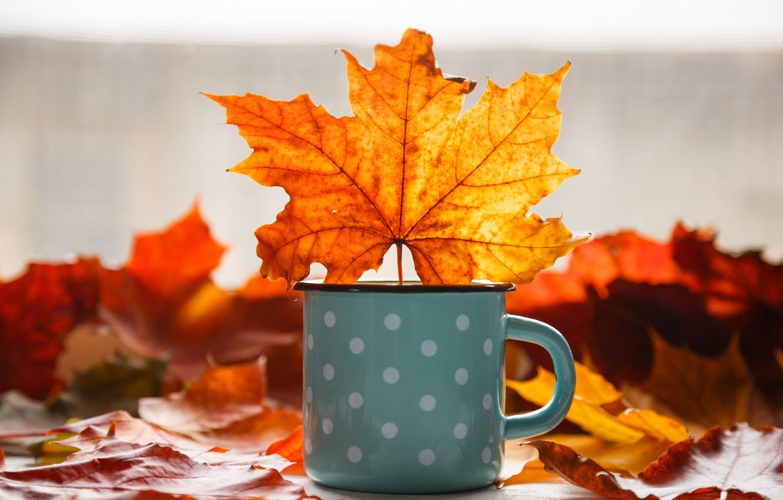 Photo wallpaper autumn, leaves, background, colorful, mug, maple, yellow, wood, autumn, leaves, mug, maple