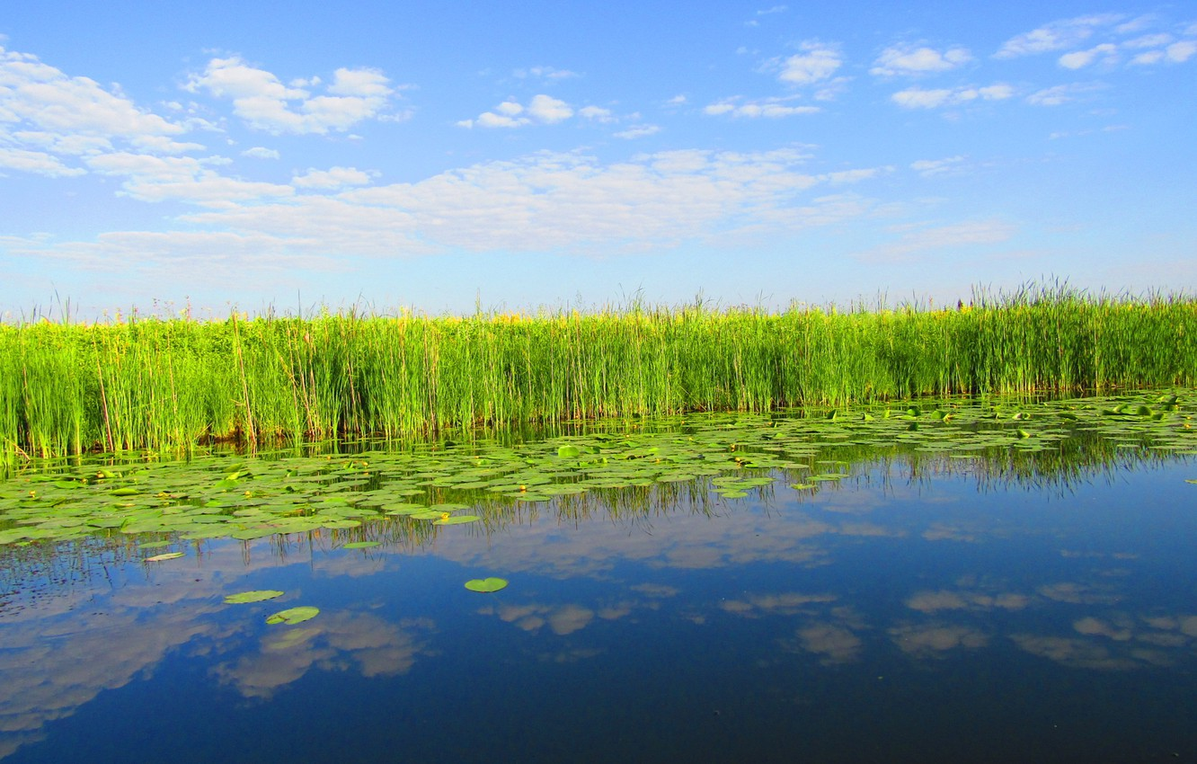 Photo wallpaper the sky, water, clouds, nature, reflection, reed, water lilies