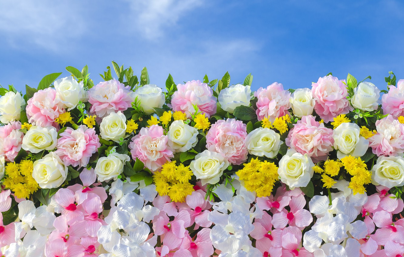 Photo wallpaper flowers, background, roses, pink, buds, pink, flowers, roses, bud