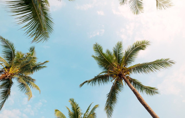 Photo wallpaper beach, summer, the sky, palm trees, summer, beach, beautiful, paradise, palms, tropical