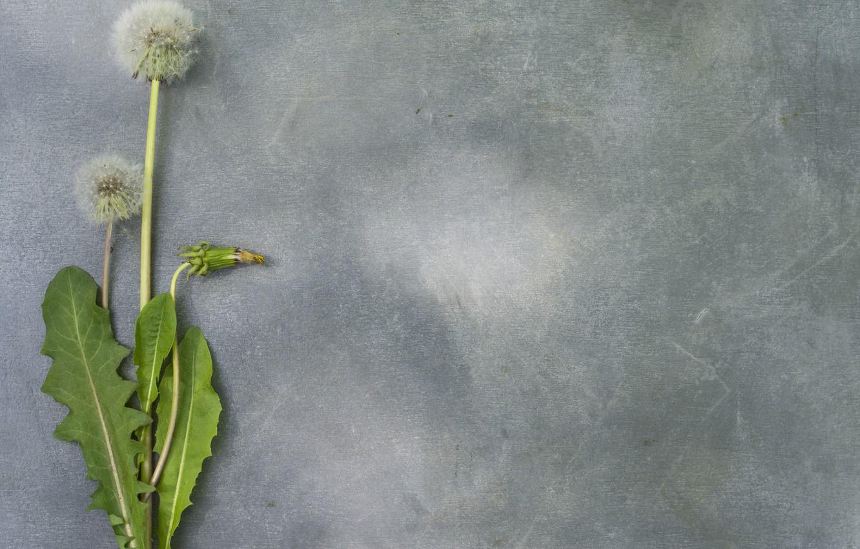 Photo wallpaper flower, dandelion, spring