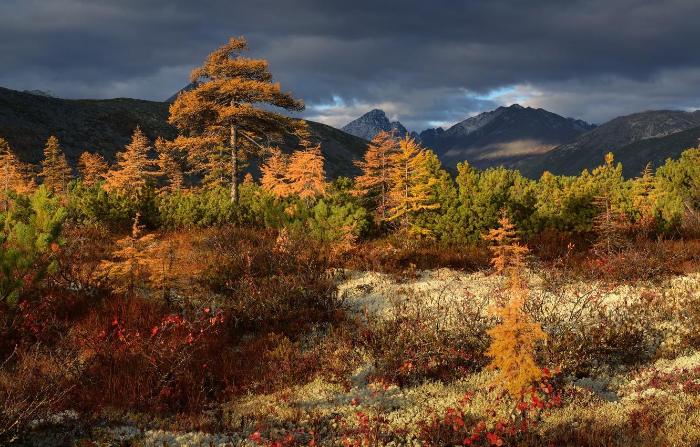 Photo wallpaper autumn, trees, landscape, mountains, clouds, nature, vegetation, Kolyma, Maxim Evdokimov