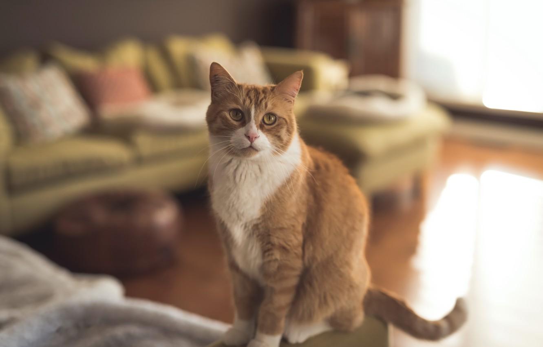 Photo wallpaper cat, comfort, house