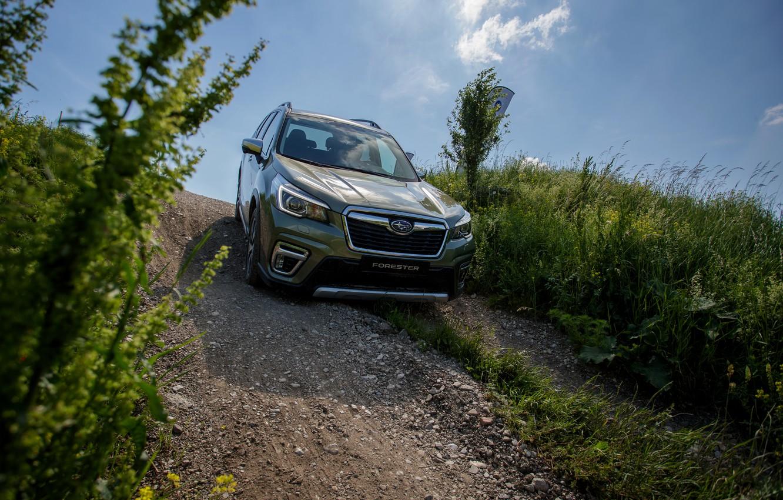 Photo wallpaper vegetation, the descent, Subaru, crossover, Forester, 2019