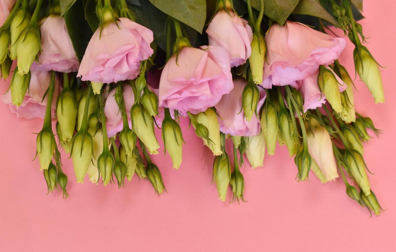 Photo wallpaper bouquet, gentle, eustoma, Victoria Dunn