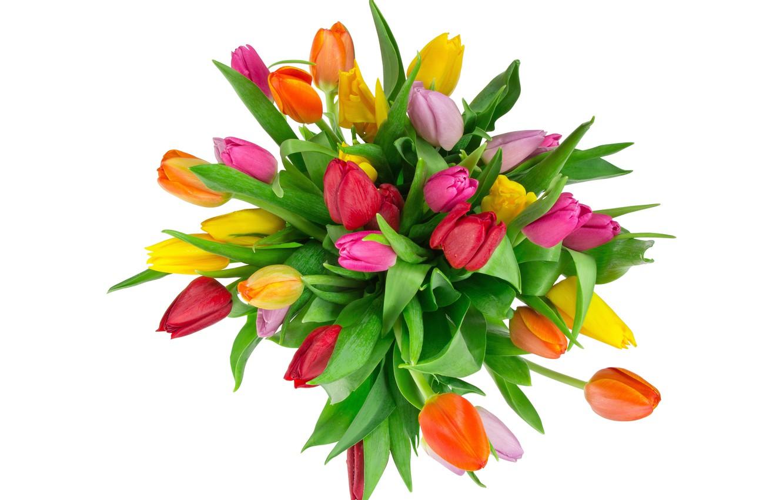 Photo wallpaper bouquet, tulips, white background