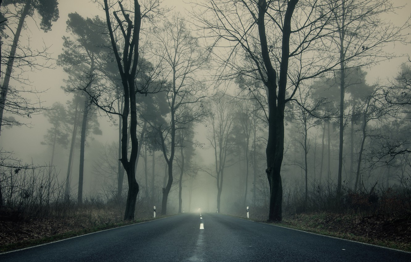 Photo wallpaper road, autumn, trees, branches, fog, Park, overcast, highway, the forest
