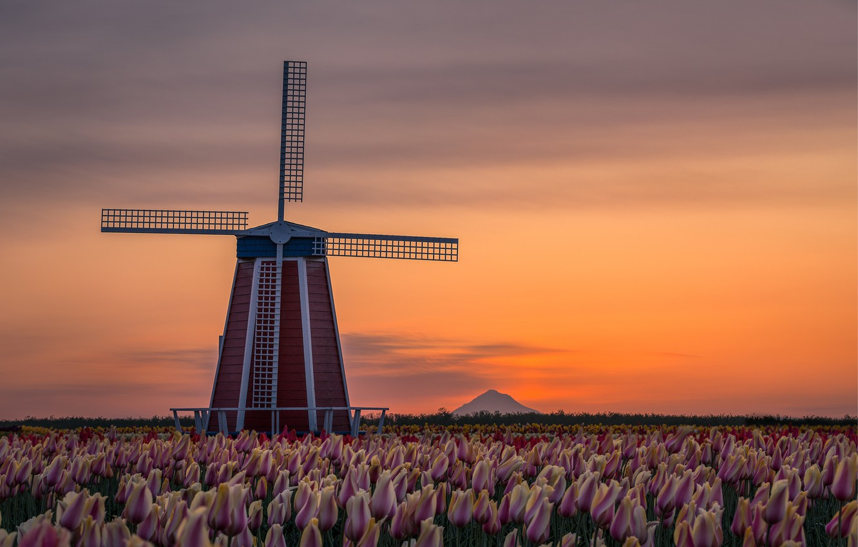 Photo wallpaper landscape, flowers, nature, dawn, spring, morning, Oregon, mill, tulips, USA, plantation