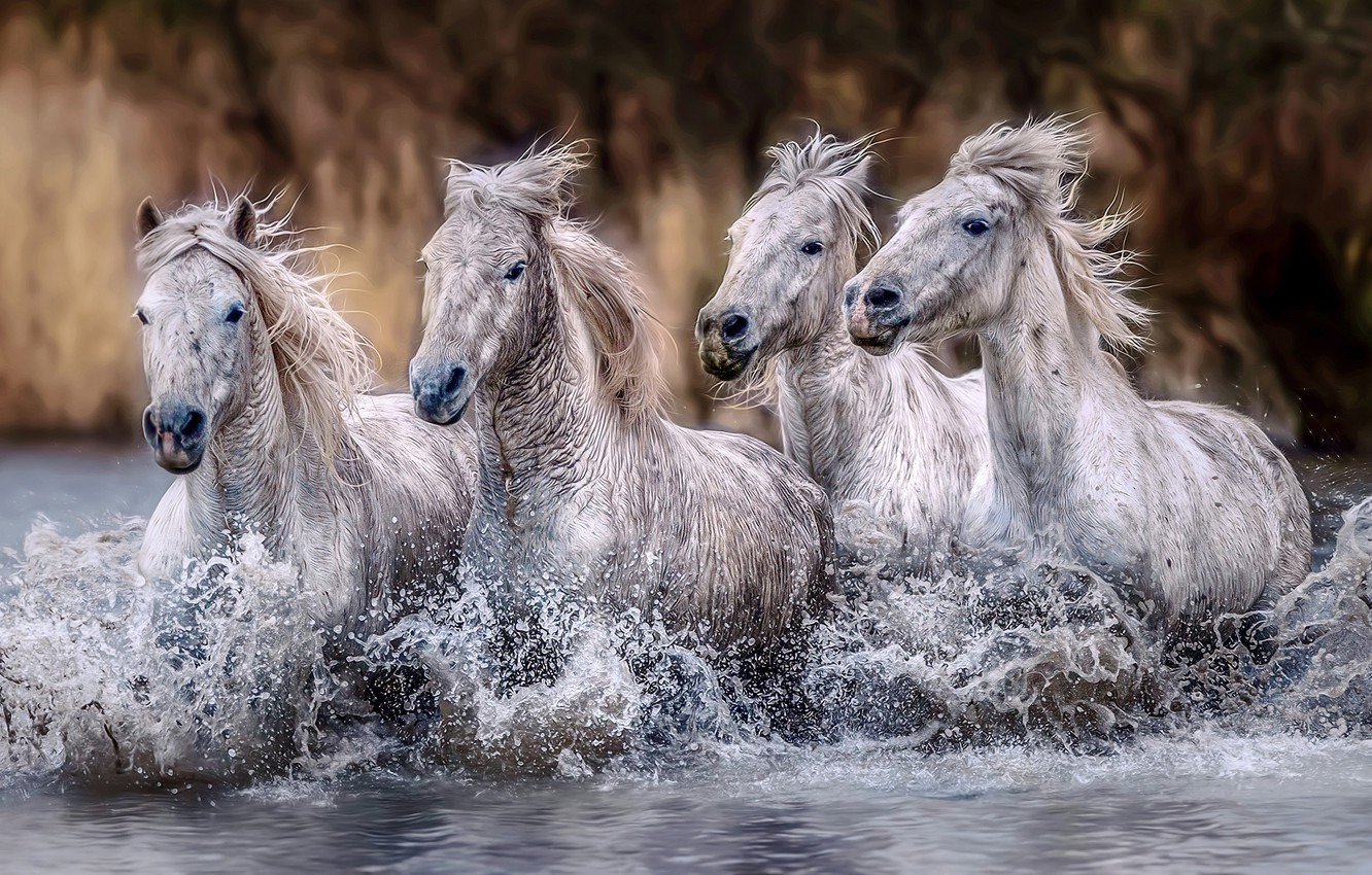 Photo wallpaper wave, look, drops, squirt, nature, shore, horses, treatment, horse, bathing, running, white, wet, pond, muzzle, …