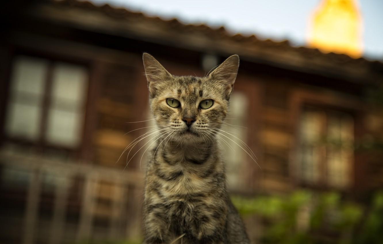 Photo wallpaper cats, cats wallpapers, Bulgaria, cute cat, Nessebar