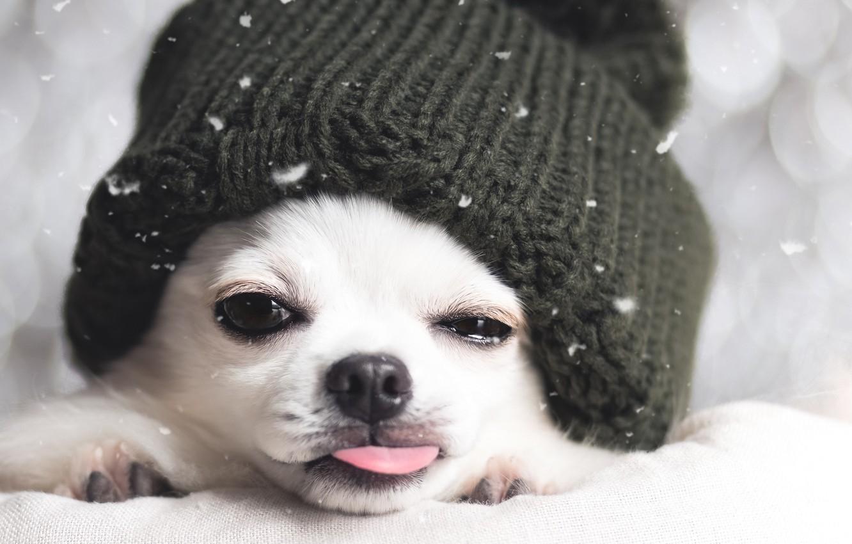 Photo wallpaper winter, each, hat, dog