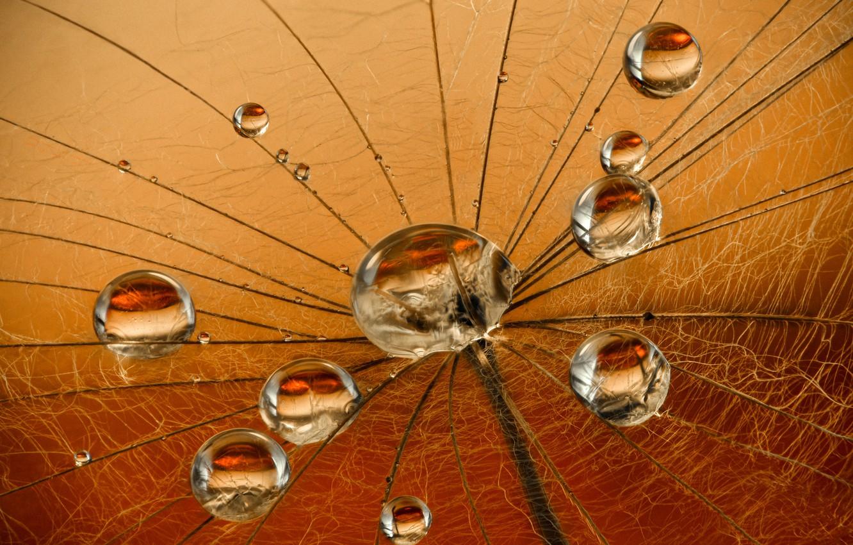 Photo wallpaper flower, drops, macro