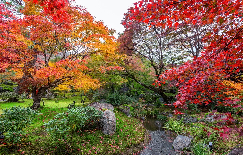 Photo wallpaper autumn, leaves, trees, Park, colorful, landscape, nature, park, autumn, leaves, tree