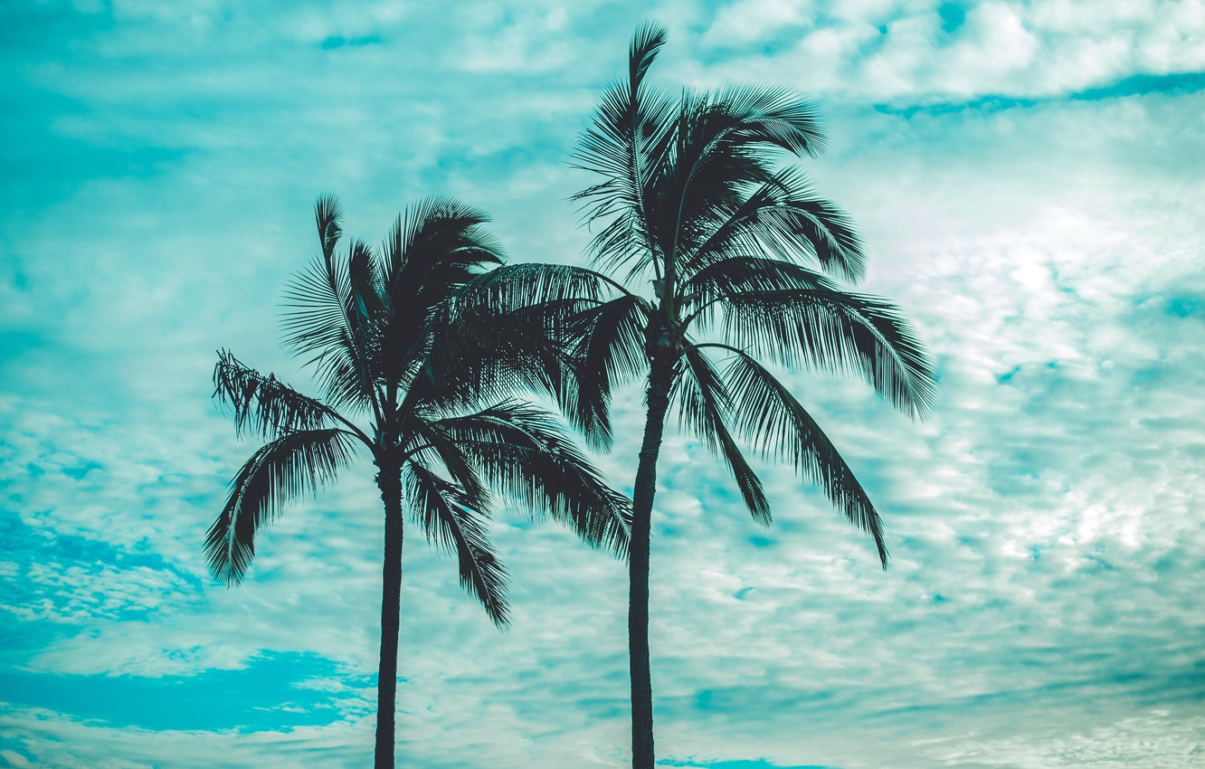 Photo wallpaper the sky, clouds, palm trees, sky, clouds, palm trees