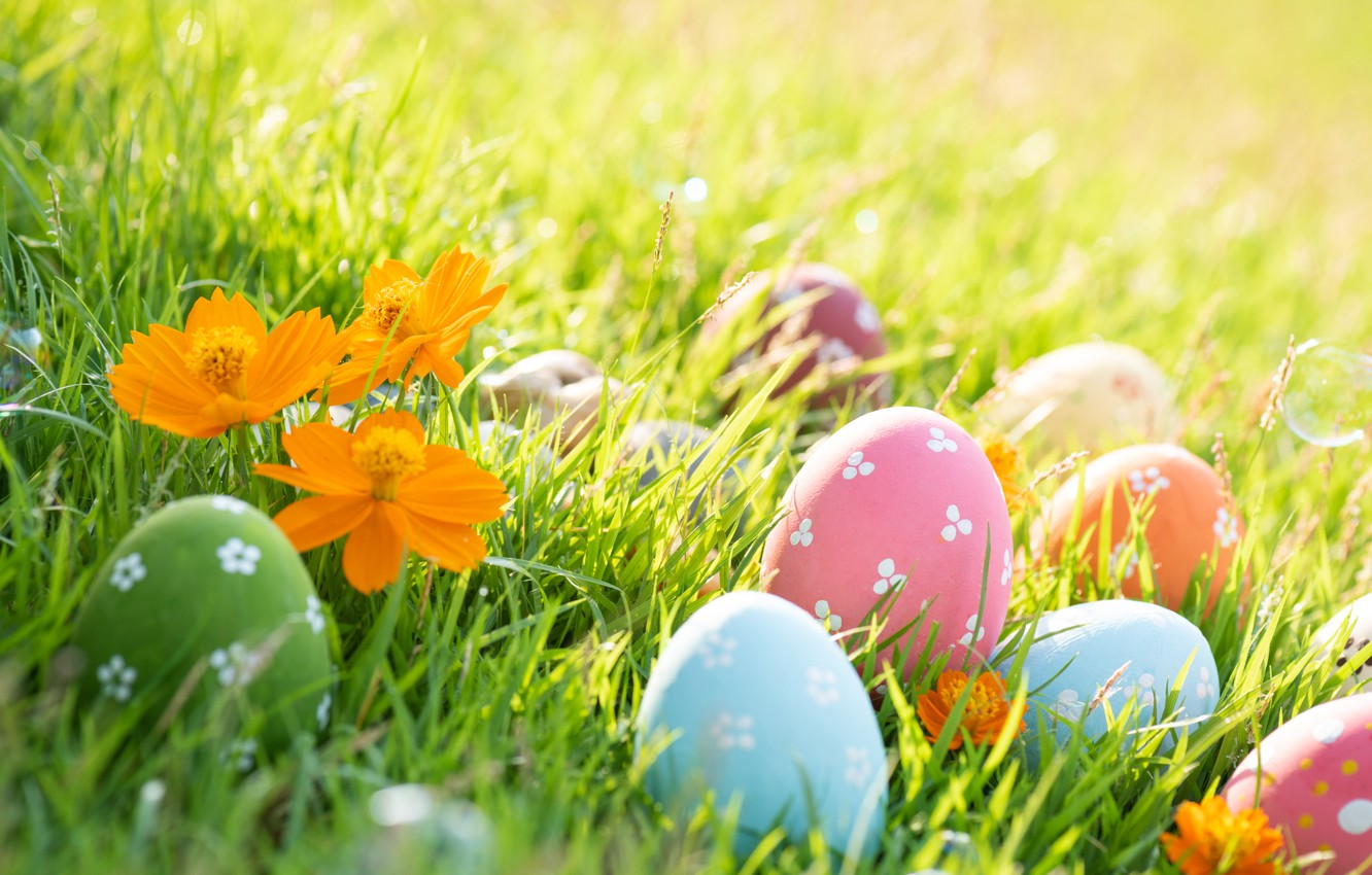 Photo wallpaper grass, flowers, spring, colorful, Easter, grass, happy, flowers, spring, Easter, eggs, painted eggs