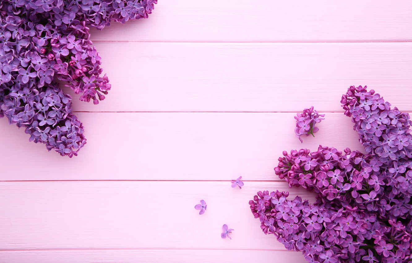 Wallpaper Flowers Background Pink Background Wood Pink