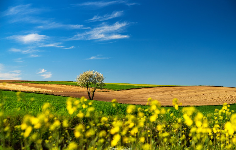 Photo wallpaper landscape, nature, tree, field, Poland, Sośnicki Michael