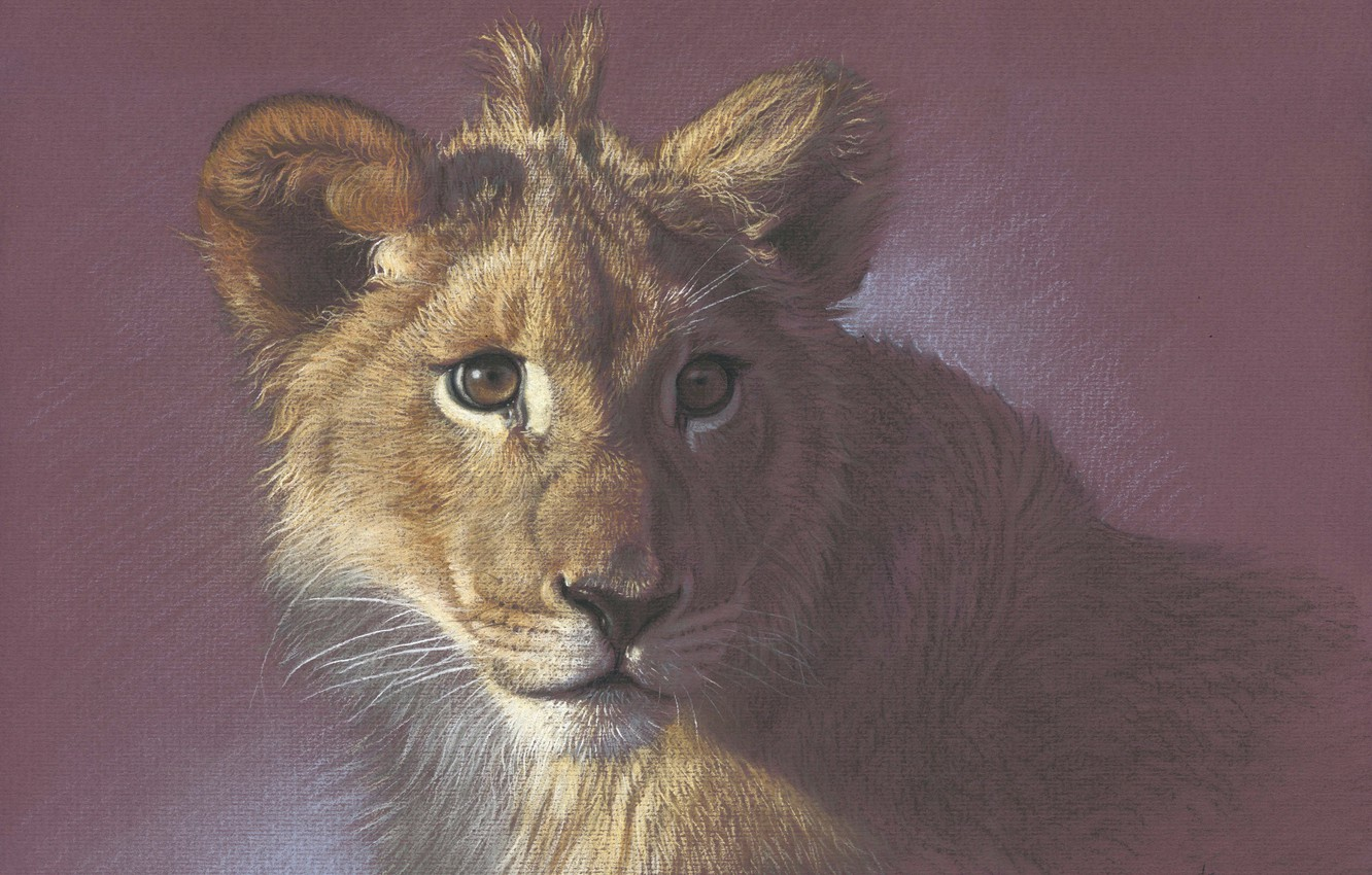Photo wallpaper portrait, painting, lion, drawing with colored pencils