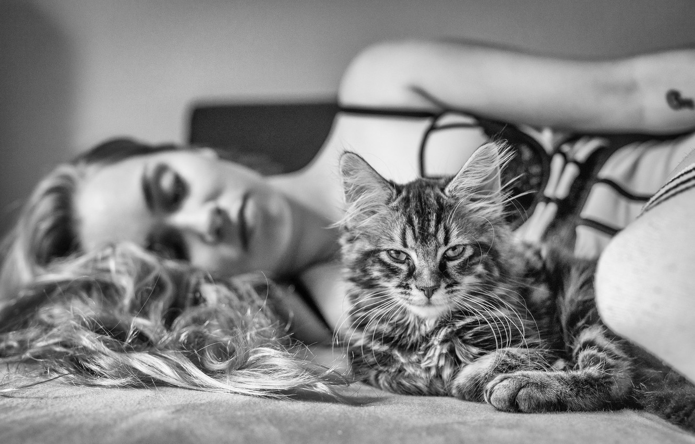 Photo wallpaper cat, look, girl, black and white, monochrome, cat