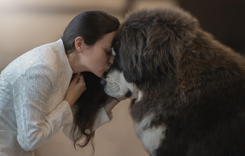 Photo wallpaper girl, each, feelings, kiss, dog, girl, dog, kiss, friend, feelings, Tibetan Mastiff, Svetlana Pisareva, tibetan …