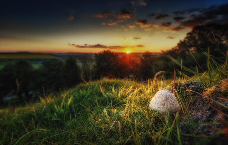 Photo wallpaper landscape, sunset, nature, mushroom