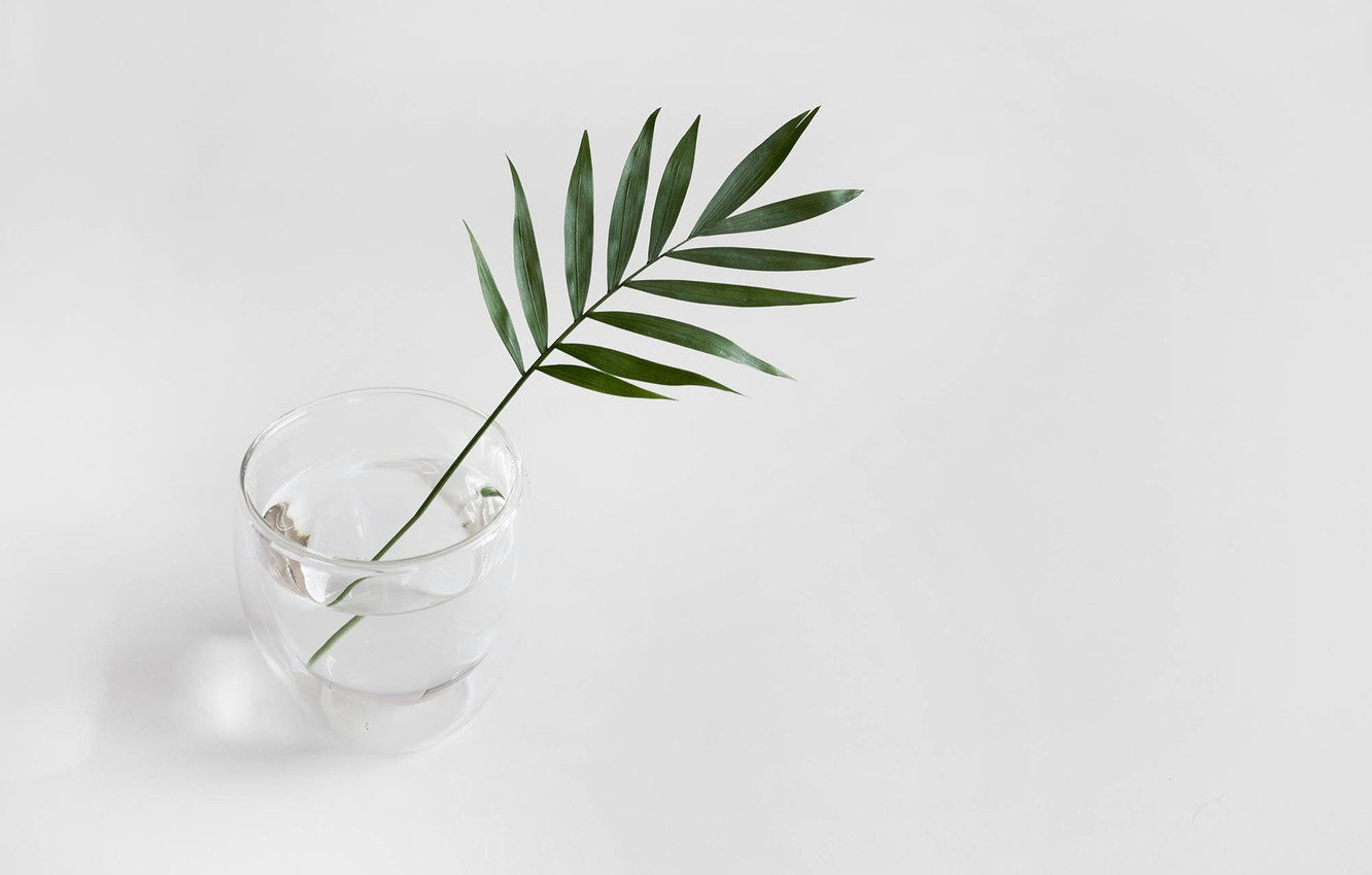 Photo wallpaper water, glass, sprig