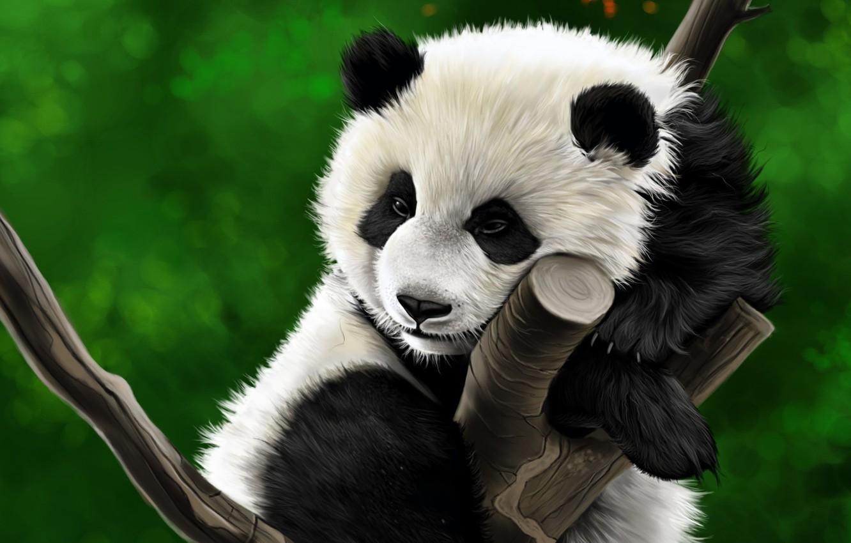 Photo wallpaper tree, figure, Panda