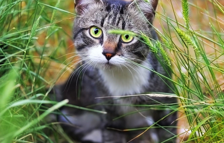 Photo wallpaper greens, cat, weed, cat