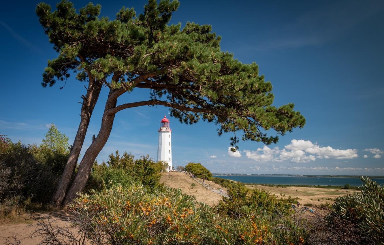 Photo wallpaper tree, coast, lighthouse