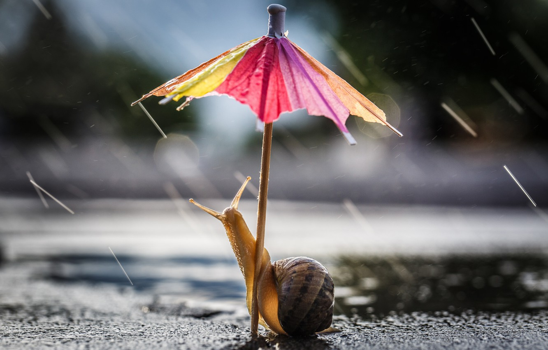 Wallpaper road, drops, macro, pose, umbrella, background, rain