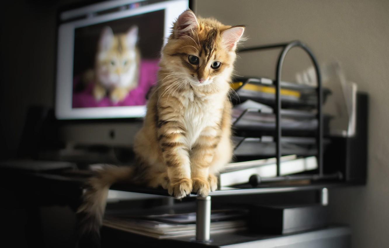 Photo wallpaper table, animal, monitor, cub, kitty, screen, paper