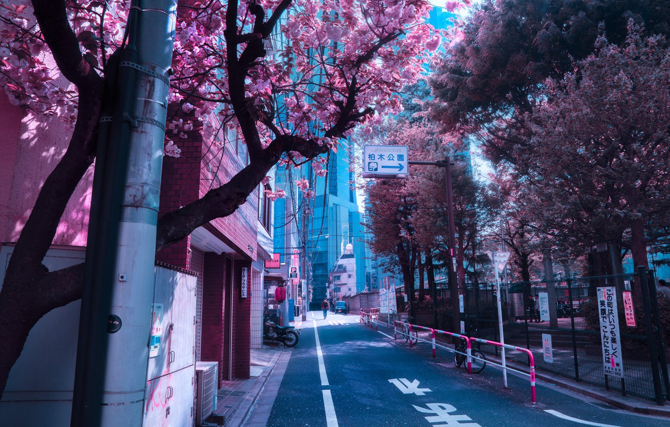 Wallpaper Japan Japan Flowering In The Spring City Street Images For Desktop Section Gorod Download