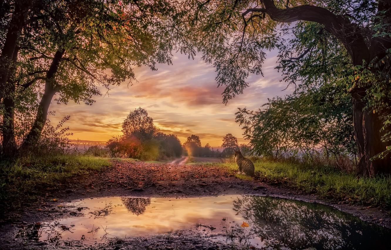 Photo wallpaper road, autumn, cat, sunset, nature, fog, puddle
