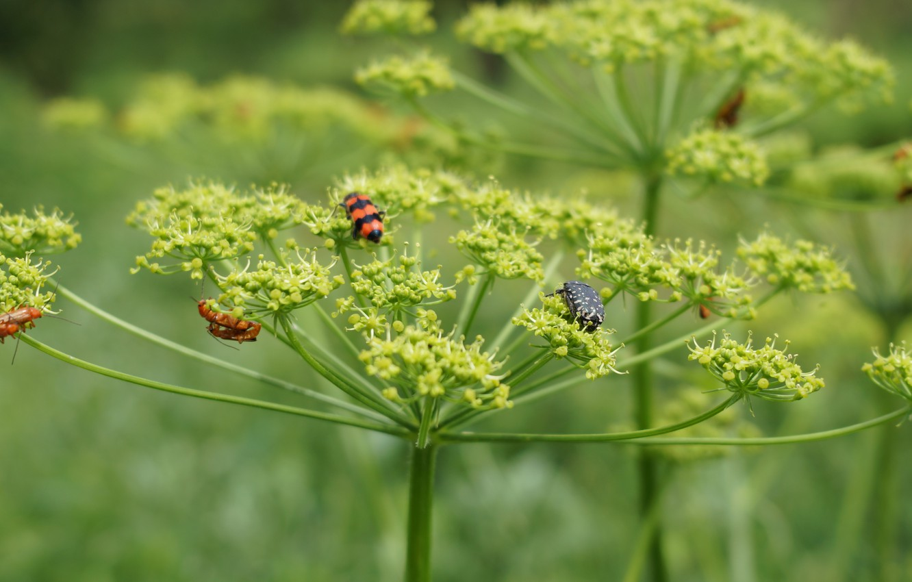 Photo wallpaper nature, plant, insect, green
