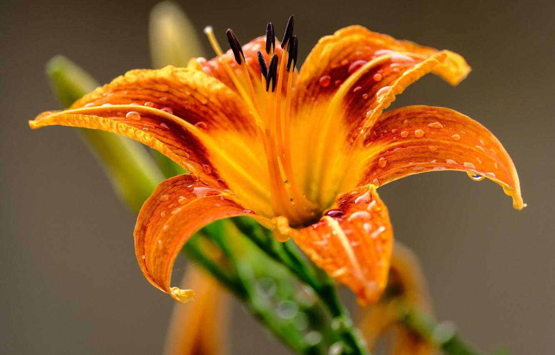 Photo wallpaper flower, macro, flower