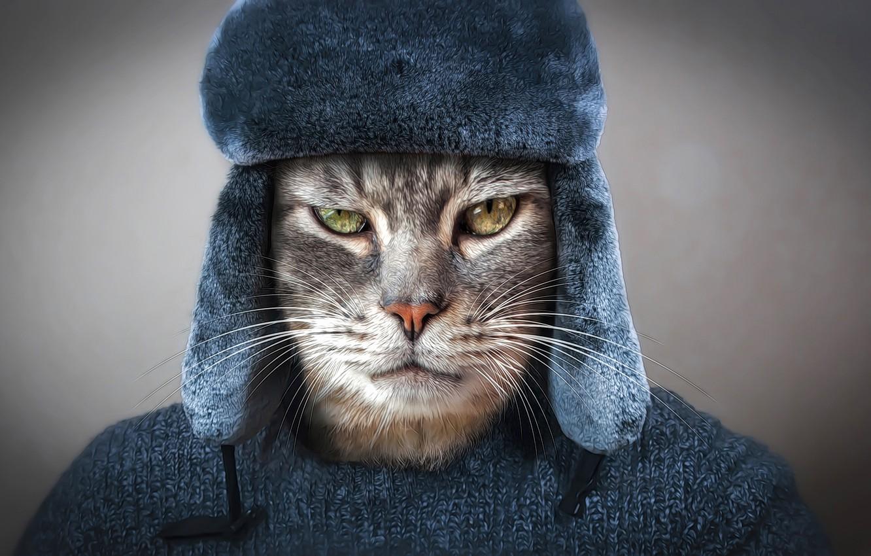 Photo wallpaper eyes, cat, look, face, rendering, grey, background, clothing, hat, photoshop, portrait, art, image, jacket, Tomcat, ...