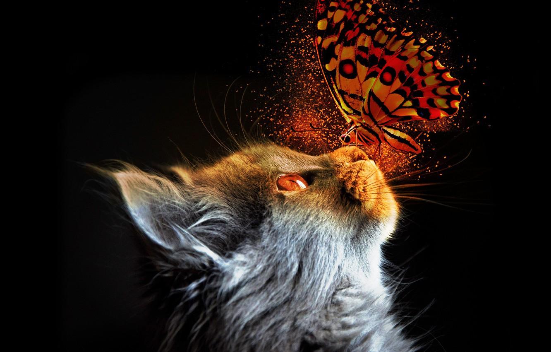 Photo wallpaper cat, light, butterfly