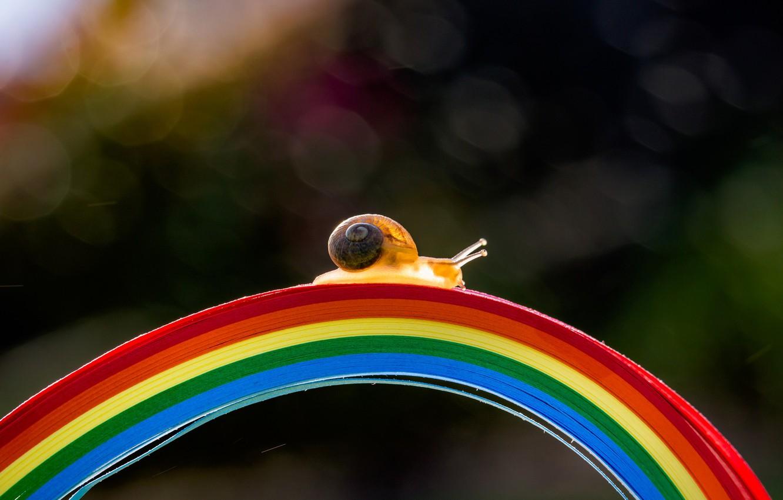 Photo wallpaper macro, light, strips, bridge, strip, the dark background, snail, rainbow, arc, shell, the bridge, the …